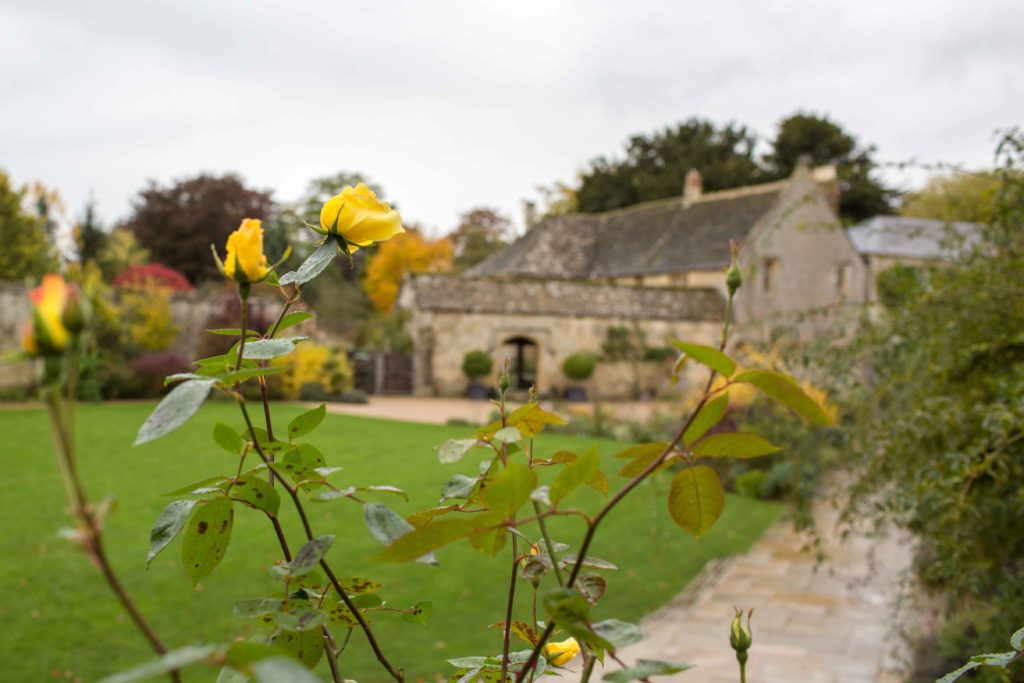Caswell House, Oxfordshire, Outside Yellow Roses Foreground